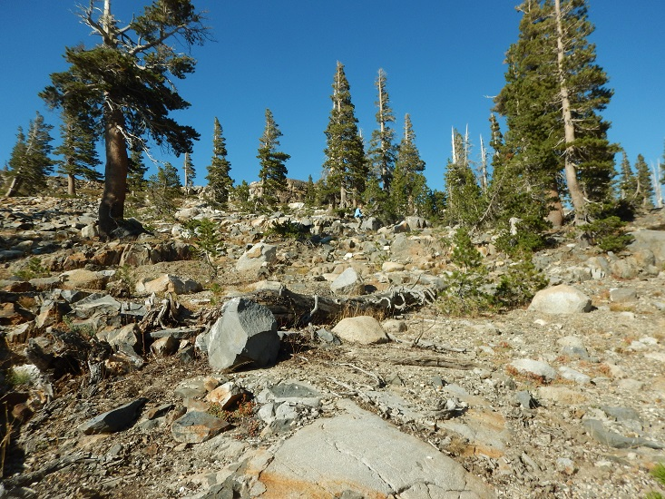 Backpacking Emigrant Wilderness and Yosemite, August, 2014